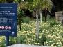 The Royal Botanic Garden Sydney : Gallery 1