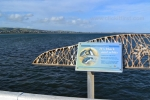 8- Victor Harbor Photo Gallery